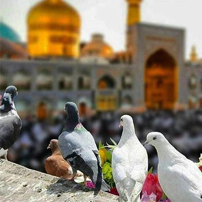 ضريح الإمام رضا (ع)